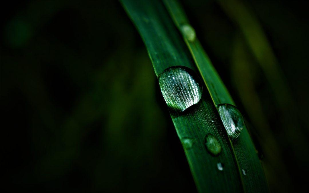 Ashwagandha a její účinky na celkové zdraví